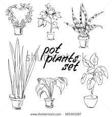vector sketch floral illustration black ink stock vector 272421197 House Plants For Sale pot plants set vector illustration flowers in pots drawn black line on a white background house plants for sale online