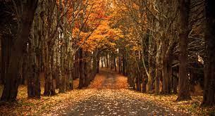 Late Autumn | Autumn wallpaper hd, Fall ...