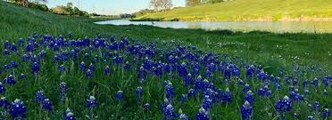 Where to Take Bluebonnet Photos in Fort Worth