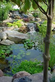 #garden pond