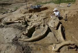 美国农民采石场发现6万年前完整猛犸骨架-酷品看图-科普