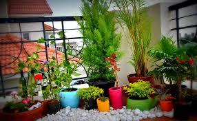Small Picture Balcony Garden Design Ideas buddyberriesCom