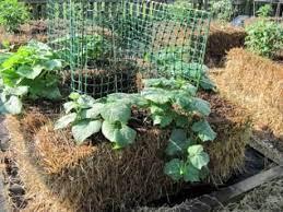 north carolina straw bale gardens in