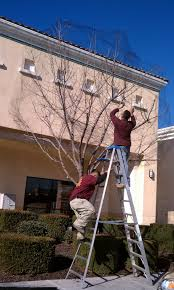 workers install bird abatement measures today outside round table pizza