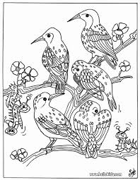 Small Picture Bird group coloring pages Hellokidscom