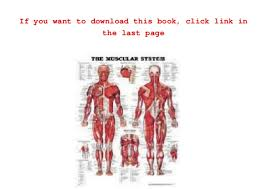 Gift Ideas The Muscular System Anatomical Chart Laminated By