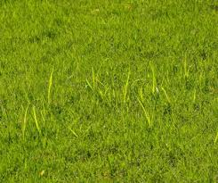 Master Gardener Control Nutsedge With Prevention Herbicide