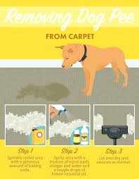 pet proof area rugs dog chew removing from carpets stain removal resistant cat pet proof area