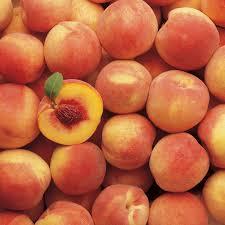 Red Fuji Apple  Apple Trees  Stark Brou0027sFull Size Fruit Trees For Sale