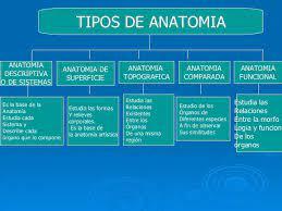 Clases De Anatomía Que Es La Anatomia
