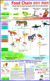 chain charts food chain charts at rs 150 piece s science charts id 7640229788