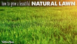 How To Grow A Beautiful Lawn Naturally Wellness Mama