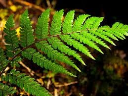a fern repeats its pattern at various scales