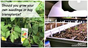 seeds vs transplants should you start