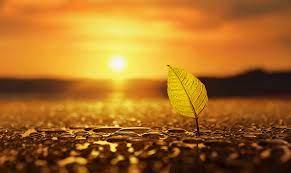วอลเปเปอร์ : แสงแดด, ความลึกของสนาม, พระอาทิตย์ตก, ธรรมชาติ, การสะท้อน,  ท้องฟ้า, ฟิลด์, หยดน้ำ, แมโคร, พระอาทิตย์ขึ้น, สีเหลือง, ตอนเย็น, เช้า,  ดวงอาทิตย์, ขอบฟ้า, bokeh, พลบค่ำ, เบา, ฤดูใบไม้ร่วง, ดอกไม้, รุ่งอรุณ,  ปลูก, วอลล์เปเปอร์คอมพิวเตอร์, ใกล้ ...