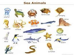 Aquatic Animals Chart Sea Animals Names Cakepins Com Learn English English