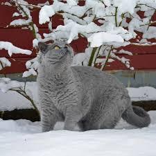 Katzen Im Schnee Die Schönster Bilder Der Facebook Fans Von