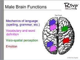 why men are great listeners gender matters tony j hughes note that the adult male brain is less connected for words emotion note that the adult female brain has words being generated in multiple areas on