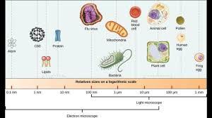 Protein Vs Virus Vs Bacteria Size Chart Clean Home