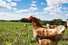 a hobby farm may require less insurance coverage than a farming business