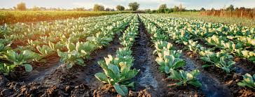 Information is provided about the company's functions, managements, evaluation process and corporate activities etc. Food Farm And Agriculture Insurance Company Gallagher Usa