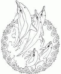Risultato Immagini Per Mandala Delfino Da Colorare Disegno Teschio