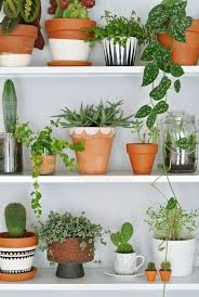 Awesome Indoor Decorative Plants Photos Amazing House Decorating . Green ...
