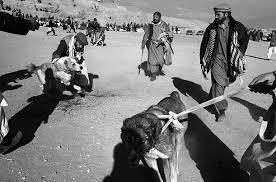 essays on dog fighting homework service iaessayiewv study info essays on dog fighting