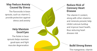 Top 5 Health Benefits Of Bean Sprouts 2 Is A Sight To
