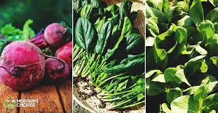 16 fast growing vegetables that will