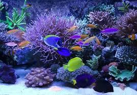 full image for reef aquarium led lighting uk diy led reef aquarium lighting kits marine aquarium
