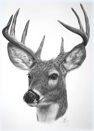 Deer Artwork Google Search Deer Drawing Deer Art