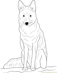 Small Picture Coyote Sitting Coloring Page Free Coyote Coloring Pages