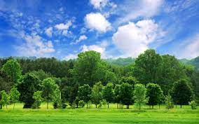 Landscape Sky Trees HD Wallpapers ...