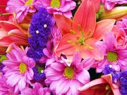 free flowers images nice flowers free screensaver program name nice flowers free