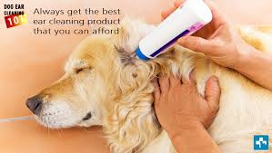 how to clean your dogs ears pet