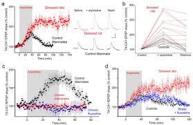 Antidepressant Washout Chart Chronic Stress Enhances Whereas Chronic Antidepressant Open I