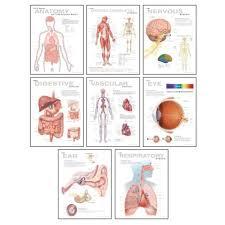Human Anatomy Chart Pack