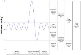 Functional Residual Capacity Wikipedia