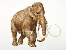 17 best images about evolution elephant extinct a depiction of a palaeolithic woolly mammoth by derek lucas