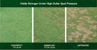 Dollar Spot Solutions Greencast Syngenta