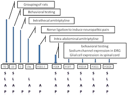 Flow Chart Of The Study Drg Dorsal Root Ganglion D Day