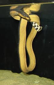 Best 46 The Kingdom of Slither images on Pinterest Animals and pets