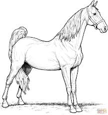 Horse Coloring Page Justinhubbard Me