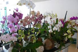 orchids as gifts