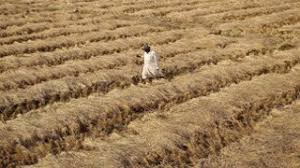 Agmax & commercial customer service: Agriculture Insurance Company Latest News On Agriculture Insurance Company Breaking Stories And Opinion Articles Firstpost