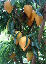 Vegans Living Off The Land List Of Uncommon Cold Hardy Fruit Southern California Fruit Trees