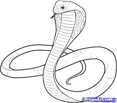 cobra drawing for kids. Modren Kids Snake Drawings For Kids  King Cobra Coloring Pages And Drawing For Kids E