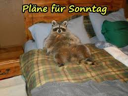Humor Sonntag Humor Faulheit Lustige Sprüche Lustige