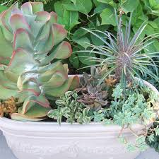 how to plant a succulent bowl garden succulent planter bowl